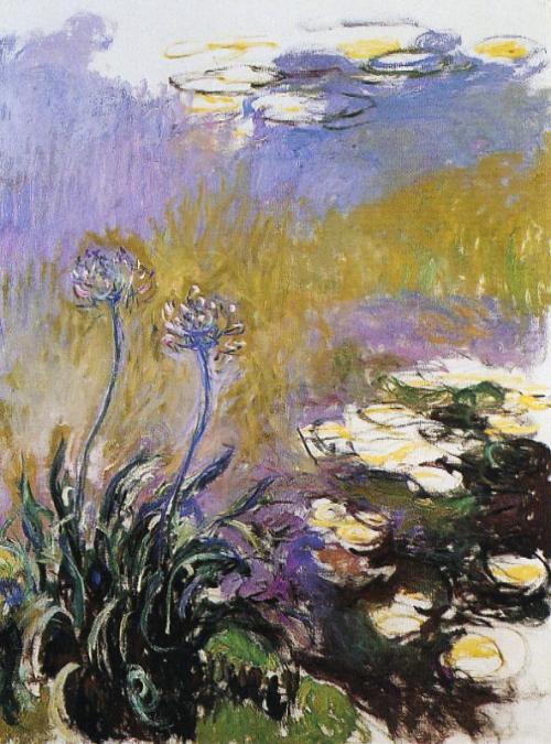Monet Agapanthus